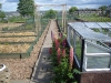 Allotment in early May