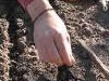 direct-seed-sowing