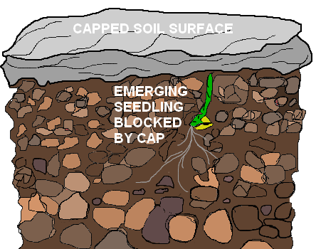 capped soil