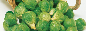 Tips On Growing Brussels Sprouts